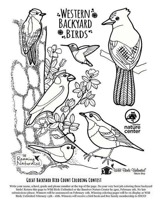 Wild Birds Unlimited  GBBC Coloring Contest 2015  Bend OR