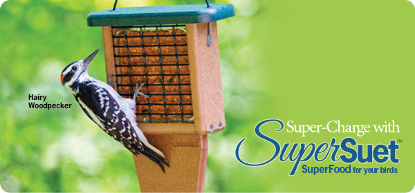 Super-Charge with SuperSuet™ - Super Food for Your Birds