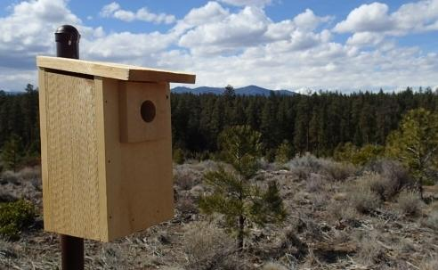 Shevlin Ridge Bluebird Box Carol